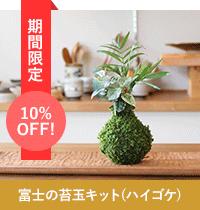 富士の苔玉キット(ハイゴケ)